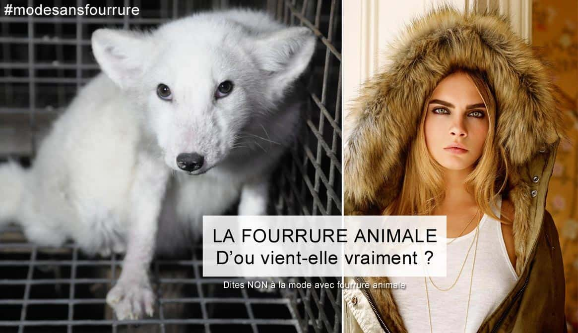 la verite sur la fourrure animale @iletaituneveggie
